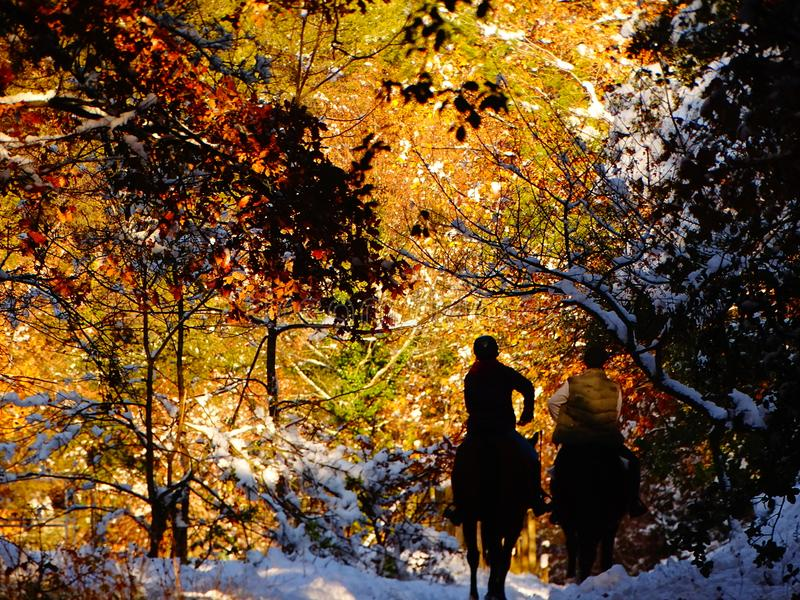 Horseriders in a colorful forest covered with snow stock photos