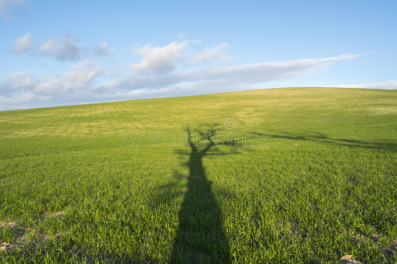 Shade of a tall tree on a green field. At sunset stock photos