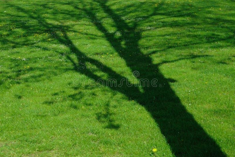 Shade of tree royalty free stock photo