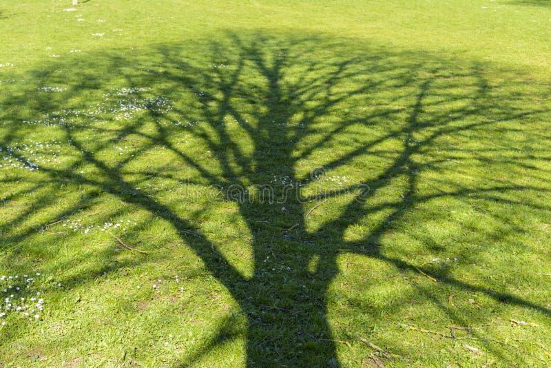 Shade tree. Shade of a tree at a green meadow stock image
