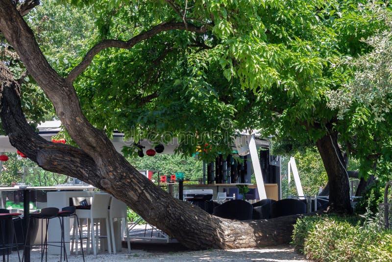 Horizontally growing tree. Shade under horizontally growing tree on the lounge bar - club royalty free stock photography