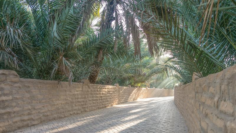 Shaded alley in Al Ain Oasis, United Arab Emirates. Shaded alley on a misty morning in Al Ain Oasis, United Arab Emirates stock photos