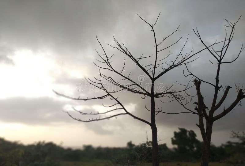 Tree. Shaded black empty tress royalty free stock image