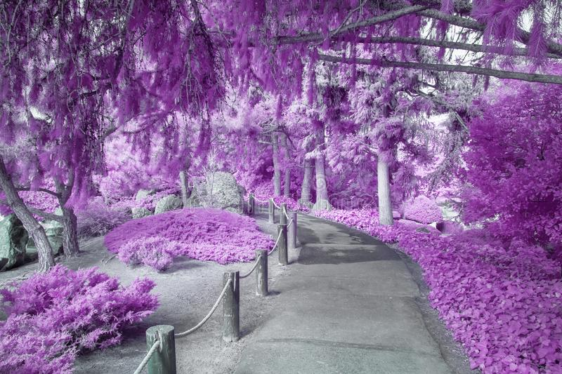 Shaded Canopy Path of Foliage in Infrared Color stock images