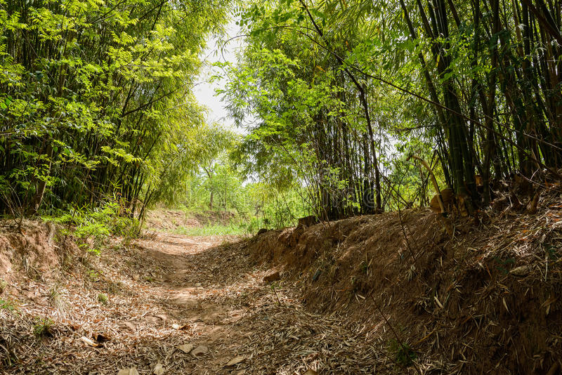 Shaded countryside footpath in bamboo on late spring day. Shady countryside footpath in bamboo on late spring day royalty free stock photos