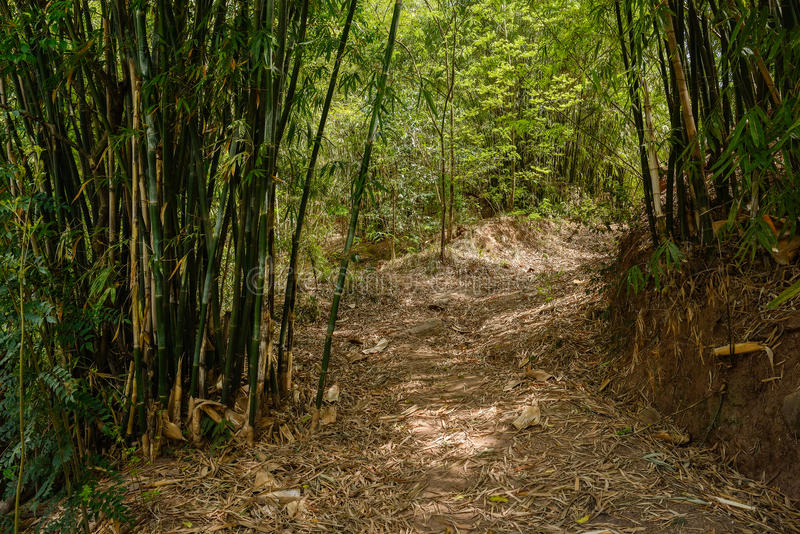Shaded footpath in bamboo on late spring day. Shady footpath in bamboo on late spring day stock photography
