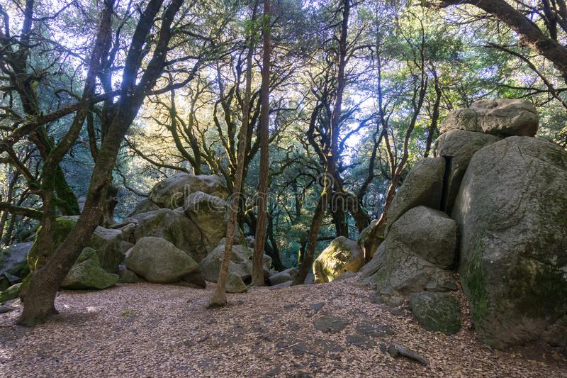 Shaded forest on a sunny morning, light filtering through the forest, Castle Rock State park, Santa Cruz mountains, San Francisco. Bay area, California stock photo