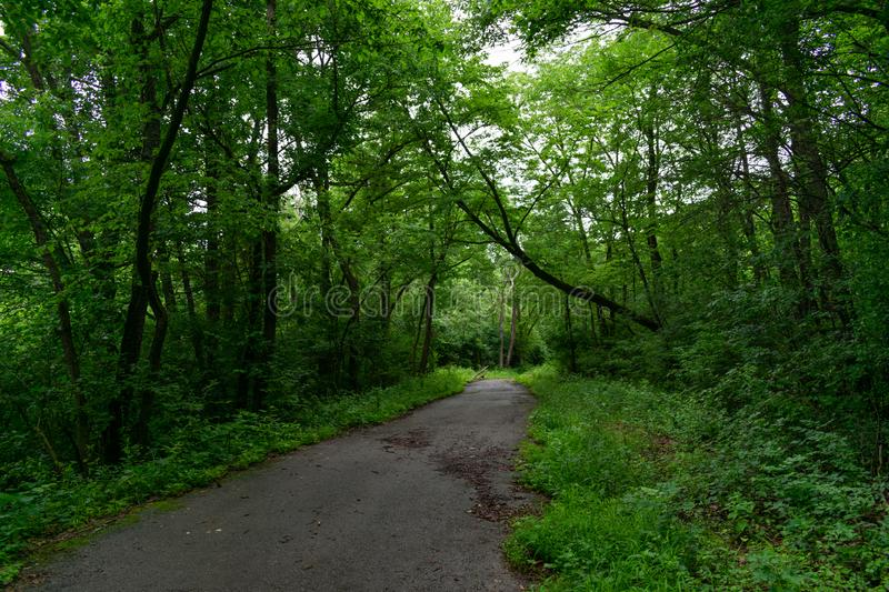 Shaded Forest Trail with Lush Green Plants and Trees at Red Gate Woods in Suburban Chicago. A shaded forest path lined with green plants and trees at Red Gate royalty free stock photography
