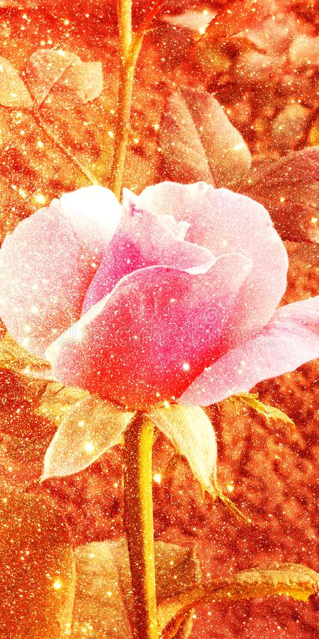 Glitter with rose shaded textured background. Shaded glitter texture abstract background stock photo
