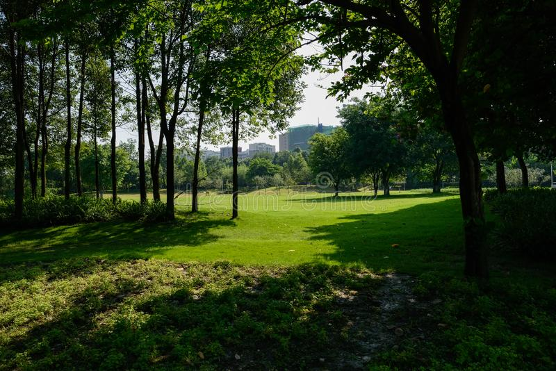 Shaded lawn before city buildings in sunny summer afternoon. Chengdu,China stock photography