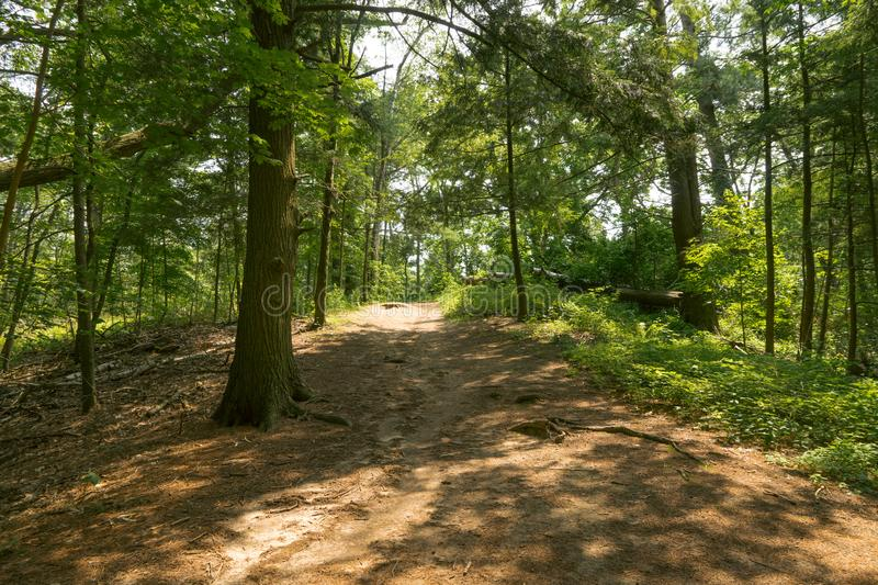 A shaded path through an evergreen forest. A shaded path along a hiking trail in an evergreen forest stock photo