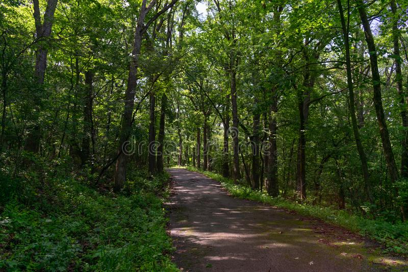 Shaded Forest Trail with Lush Green Plants and Trees at Red Gate Woods in Suburban Chicago. A shaded path lined with green plants and trees at Red Gate Woods in stock image