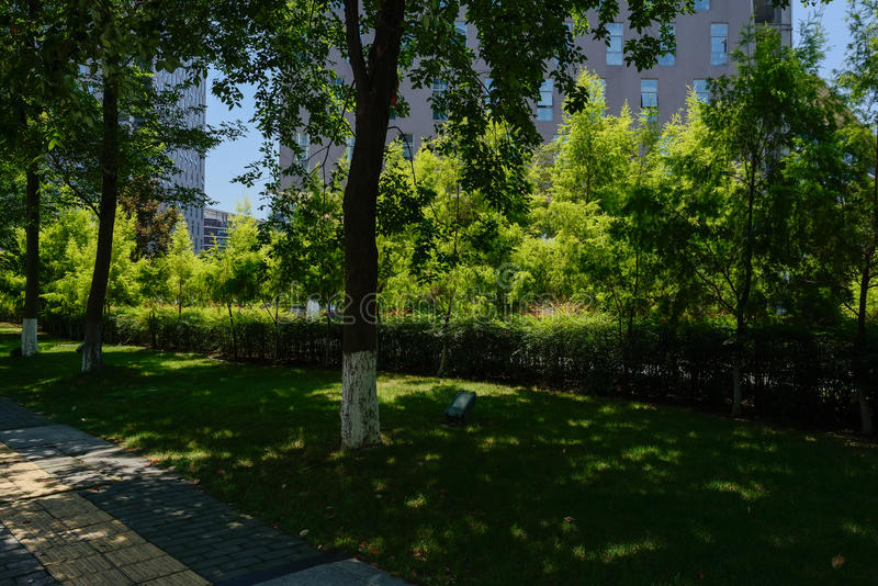 Shaded path before modern buildings hedged with shrubs in sunny. Shaded pavement before modern buildings hedged with shrubs in sunny summer,Chengdu,China stock image