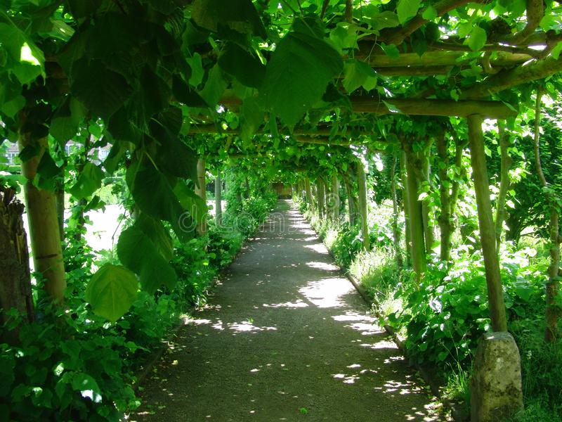 A Shaded Path In Summer. Vines Giving Shade royalty free stock image