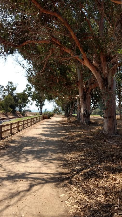 Shaded Pathway. A tree lined walking path next to the ocean royalty free stock images