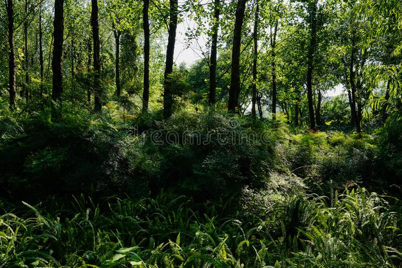 Shaded plants and trees on urban fringe in sunny summer afternoon. Shaded plants and trees on the urban fringe in sunny summer afternoon,Chengdu,China stock photos