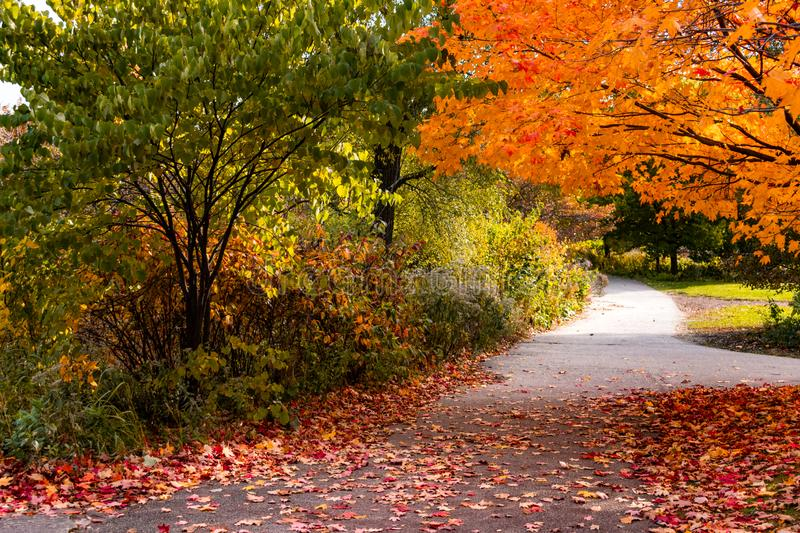 Shaded Trail during Autumn in Lincoln Park Chicago stock images
