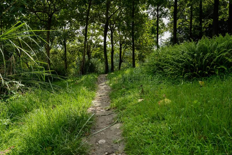 Shaded trail in grass and weeds before woods on sunny summer day. Shaded trail in grass and weeds before the woods on sunny summer day,Chengdu,China royalty free stock photos