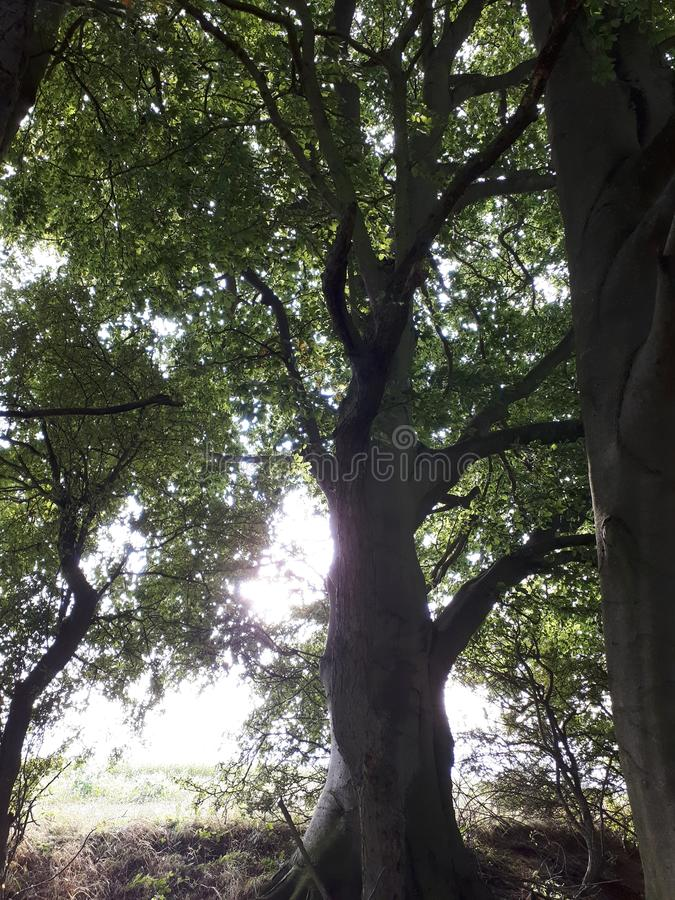 Shaded By Trees. Old Woodland Trees stock photos