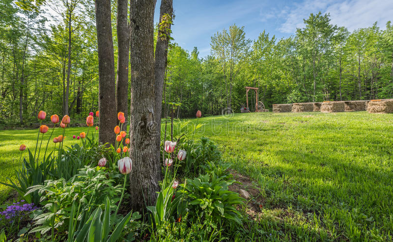 Shaded tulip garden front lawn, prepared for a simple country wedding. Shaded tulip and flower garden . Country front lawn springtime. Sunny day setting for an royalty free stock photo