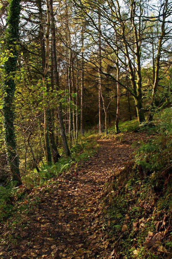 Shaded Woodland Walk royalty free stock image