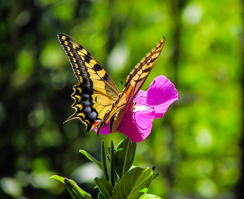 1000 shades of butterfly on a sunny day royalty free stock photo
