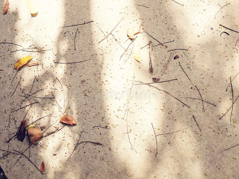 Shades of the tree on grunge concrete stock photos