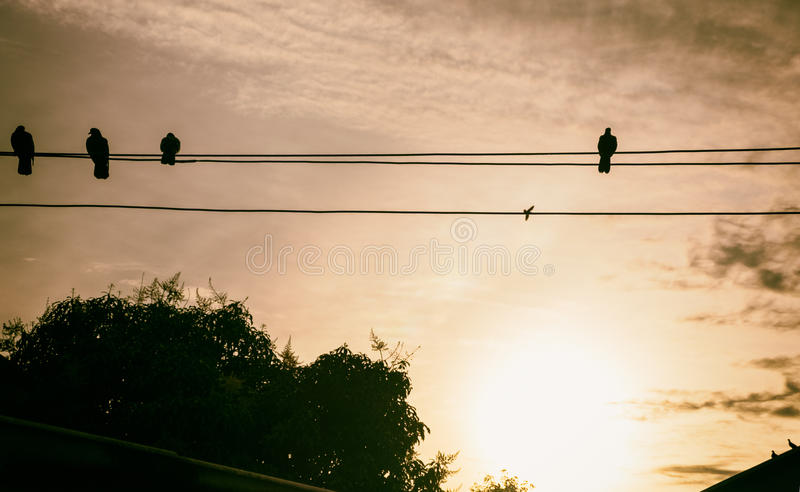 Shadow Bird Island Wire The sun sets stock photo