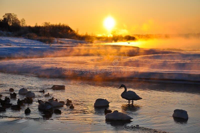 Shadow of bird in winter royalty free stock photo