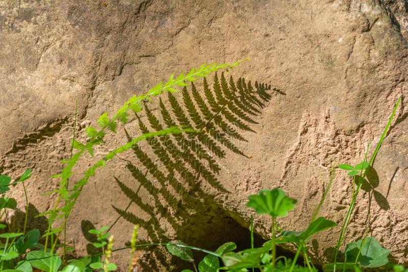 The shadow of a fern on a stone stock images