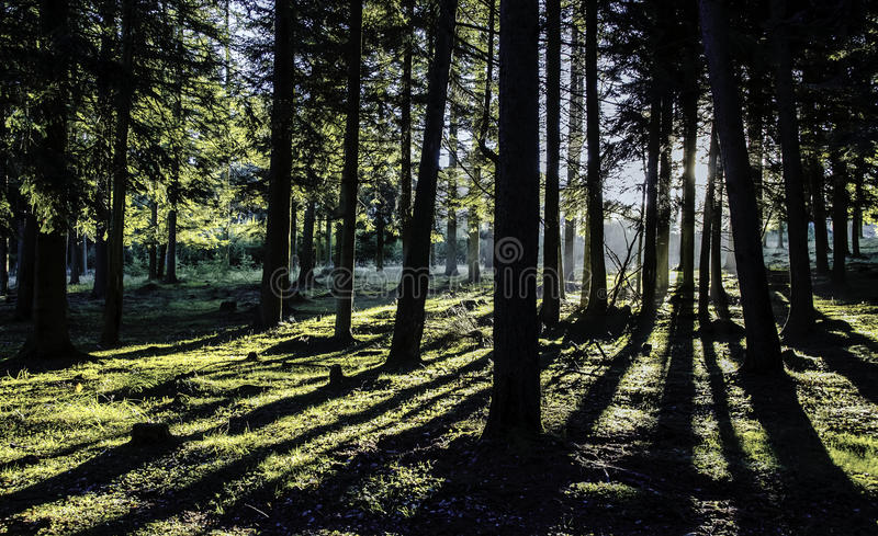 Shadow forest stock photo