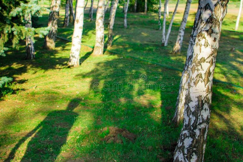Shadow in the forest. Walk through the forest summer light abstraction stock photos