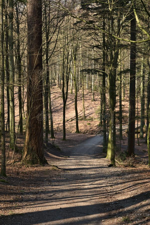 Shadow in the Forest. Shadow in a forest at spring royalty free stock photo