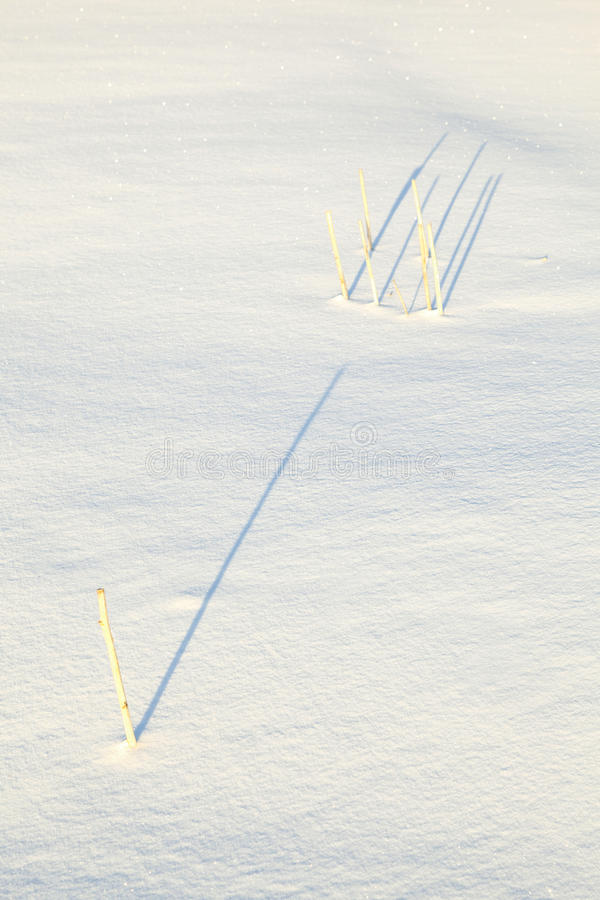 Shadow of halm on snow covered. Field gives a harmonic structure royalty free stock image