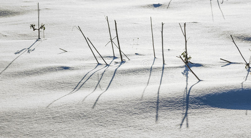 Shadow of halm on snow covered. Field gives a harmonic structure royalty free stock photo