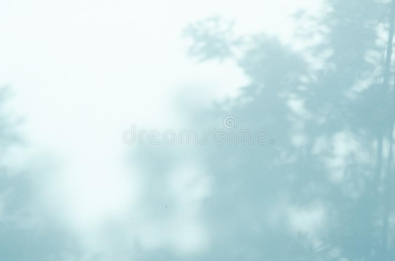 Shadow of the leaves on a blue wall. Image royalty free stock image