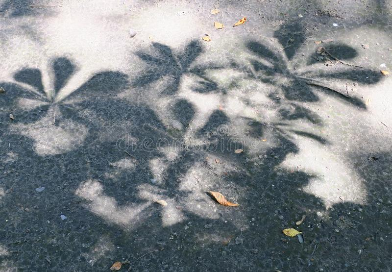 Shadow of the leaves of a chesnut tree on the garden path royalty free stock image