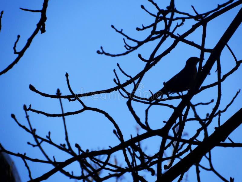 The shadow of a little bird royalty free stock photos