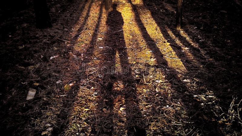 The shadow of a man in the forest with the shadows of the trees. Shadow with big legs and a small body due to the low sun stock photography