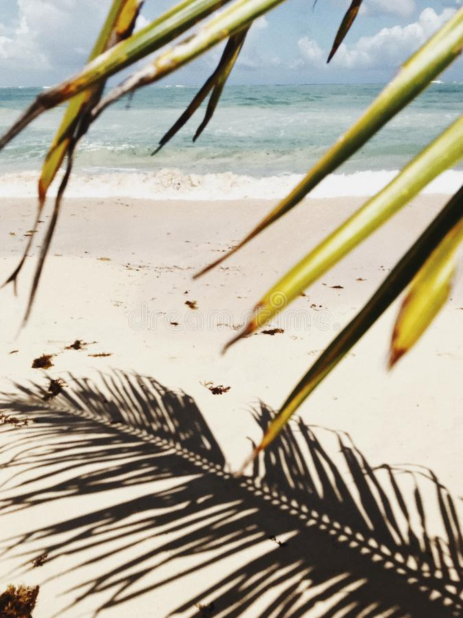Shadow of palm leaf on white send of Macao Beach. Against stormy Atlantic Ocean under cloudy sky and green palm leaves on the foreground royalty free stock images