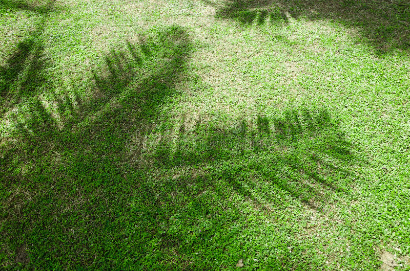 Shadow of the palm leaves