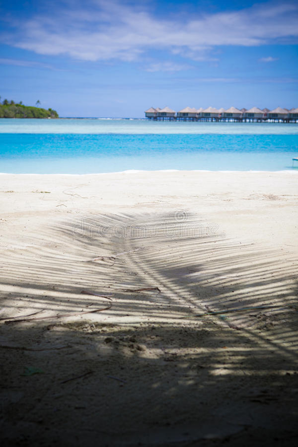 Download Shadow of palm tree stock image. Image of huts, meditative - 28883639