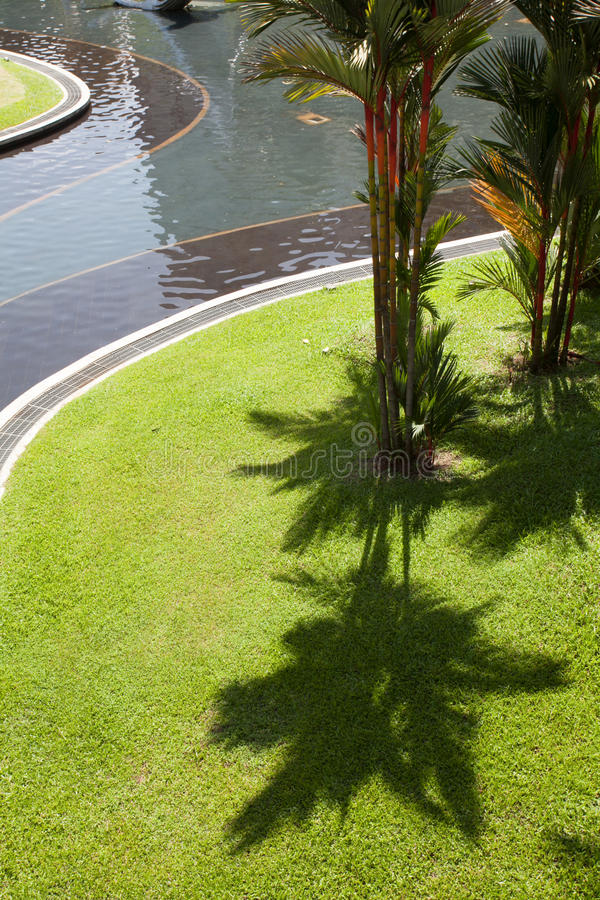 The shadow of the palms on the green grass. royalty free stock photos