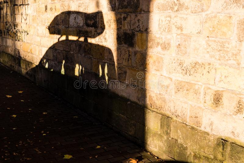 Shadow of parked car with roof box.  stock photos
