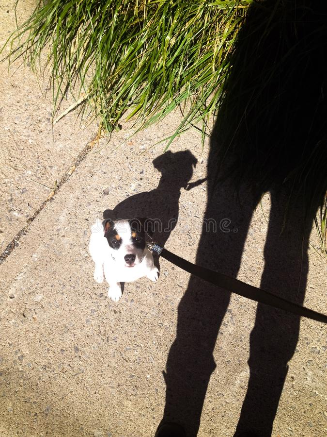 Shadow puppy dog on leash looking up at person royalty free stock photography