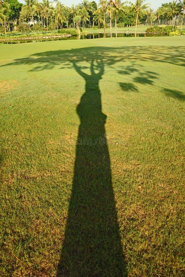Shadow of Tree royalty free stock photo