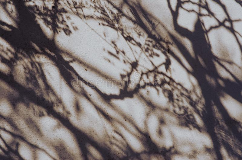 shadow of tree on the wall. vintage concept royalty free stock photography