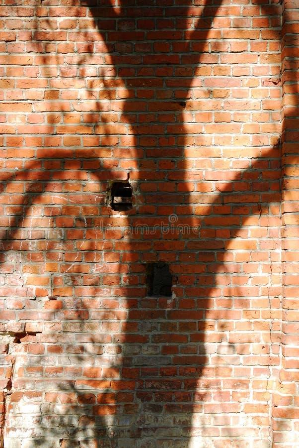 Shadow trees stock photography