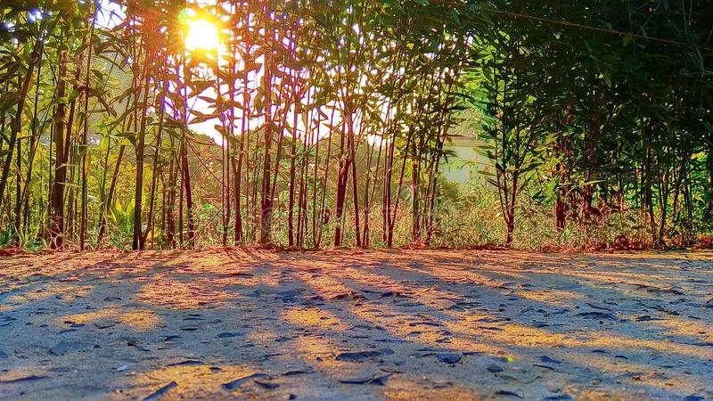 Shadow of trees and rising sun. Shadow of trees on the ground and golden sun royalty free stock photography