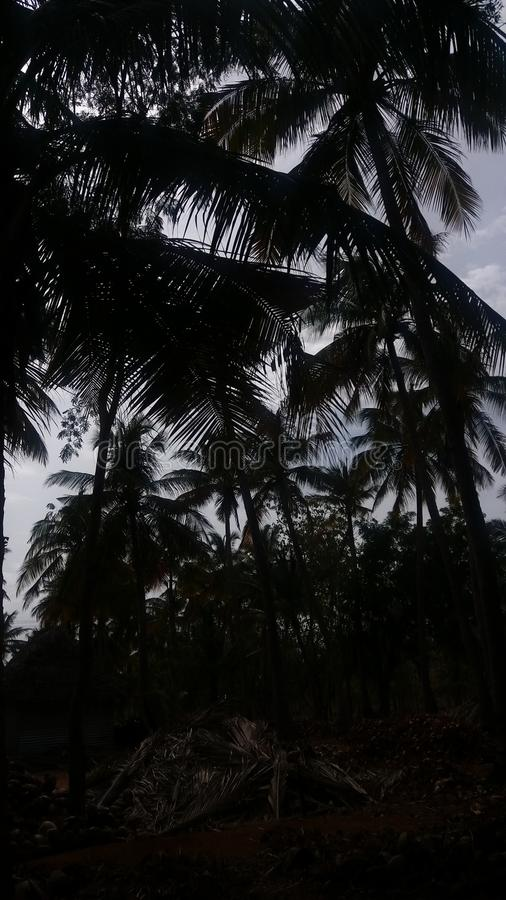 Shadow of the tress. Shadow tress green garden coconut stock photos